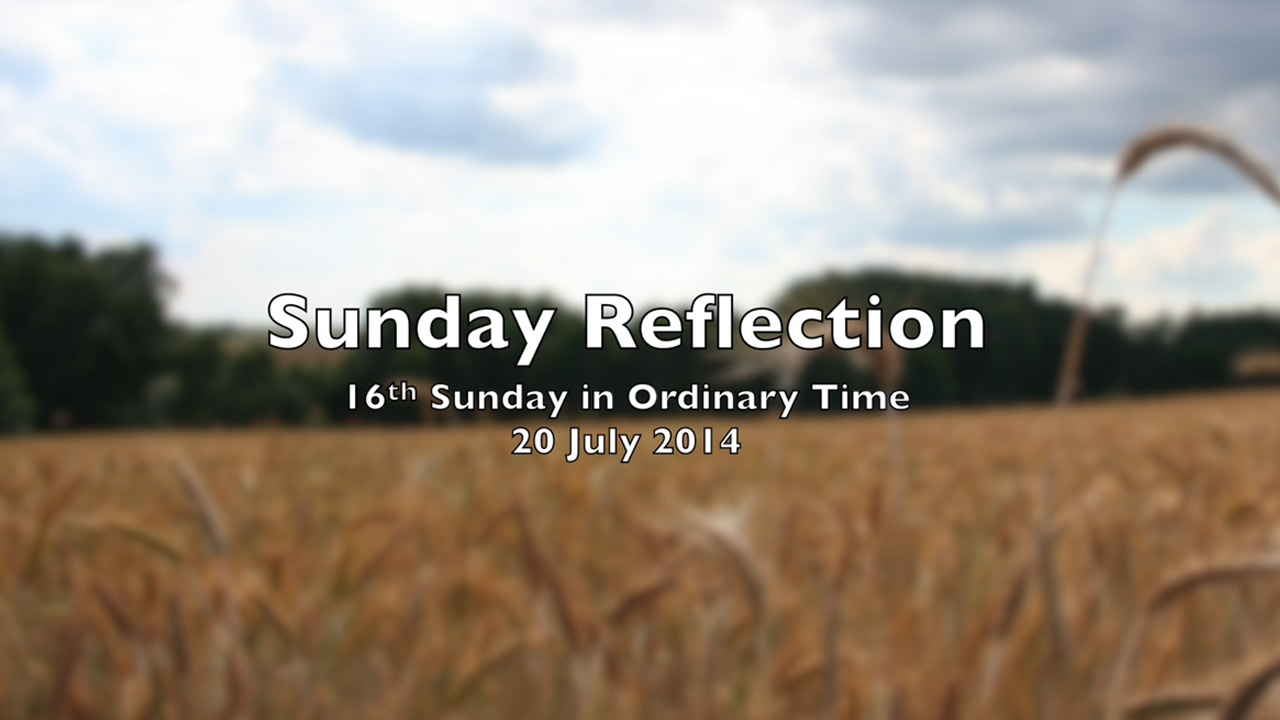 Reflection for 16th Sunday in Ordinary Time